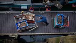 Après l'accord sur le Brexit, l'État annonce un plan d'aide pour les pêcheurs et mareyeurs