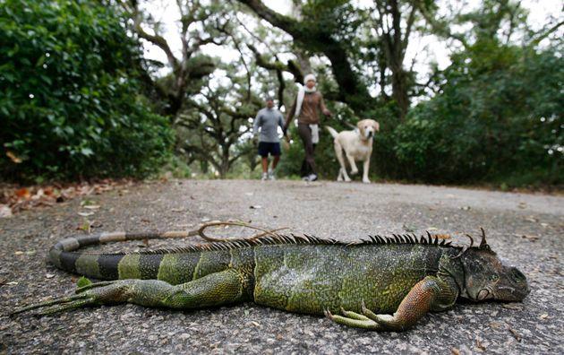 Φλόριντα: Οι χαμηλές θερμοκρασίες φέρνουν «βροχή» από