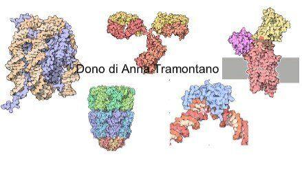 Figura 1. Strutture tridimensionali di proteine e