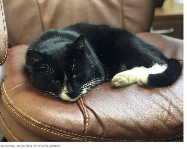 Ρωσία: Απονεμήθηκε κυβερνητικό αξίωμα σε γάτα που διασώθηκε σε