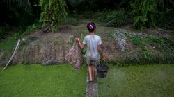 Child Labor In Palm Oil Industry Tied To Girl Scout