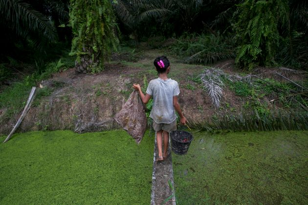 A child carries palm kernels collected from the ground across a creek at a palm oil plantation in Sumatra,...