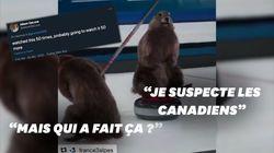 Les Américains découvrent les marmottes de France 3, et ils sont