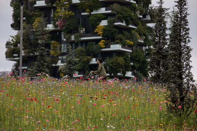 MILAN, ITALY - MAY 06: A woman, wearing a protective face mask, rides a bicycle past a field of blooming...