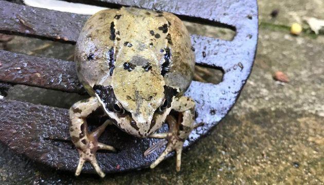 Βάτραχος πίστευε ότι...