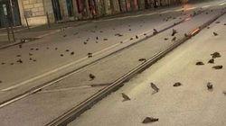 Cientos de pájaros aparecen muertos en las calles de Roma por culpa de los fuegos