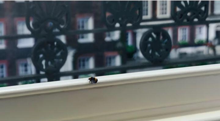 La abeja de la última escena del final de 'Los Bridgerton' (Netflix).