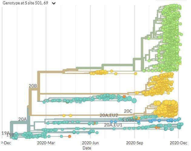 L'arbre phylogénétique du coronavirus Sars-Cov 2. En vert, la souche découverte en Angleterre. Les gros points jaunes, en bas du graphique, sont ceux relatifs à la souche découverte en Afrique du Sud.