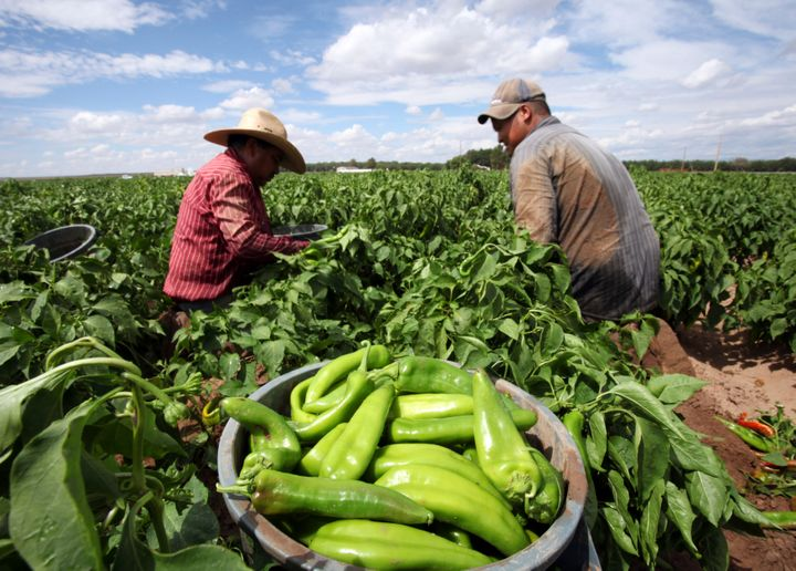 The Trump administration finalized a new rule that would lower base pay for agricultural guest workers. The Democratic Congre