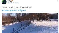 El vídeo de lo que hace un perro tras la nevada que lleva casi 3 millones de