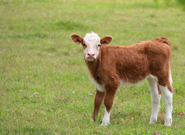 Το 66% των Ευρωπαίων μείωσε την κατανάλωση κρέατος λόγω κλιματικής
