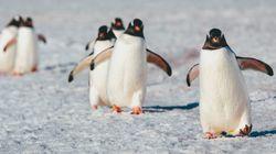 El truco para no caerse sobre el hielo es caminar como un