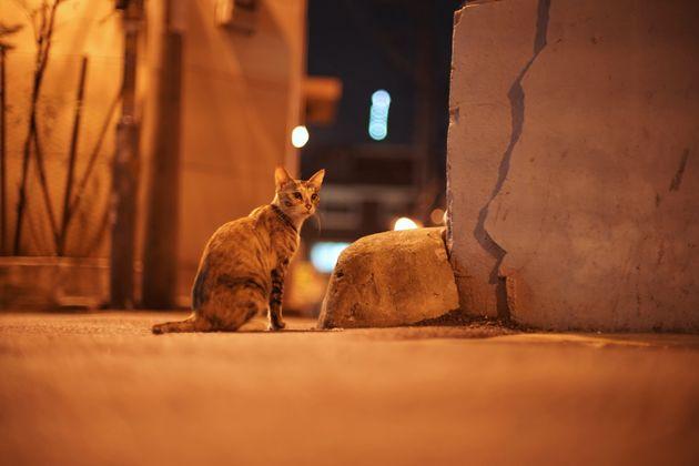 밤마다 동네를 돌아다니는 서울 길고양이