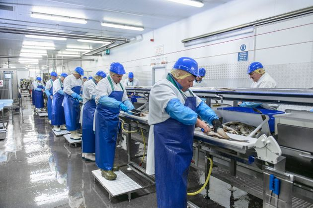 File photo of workers in a fish