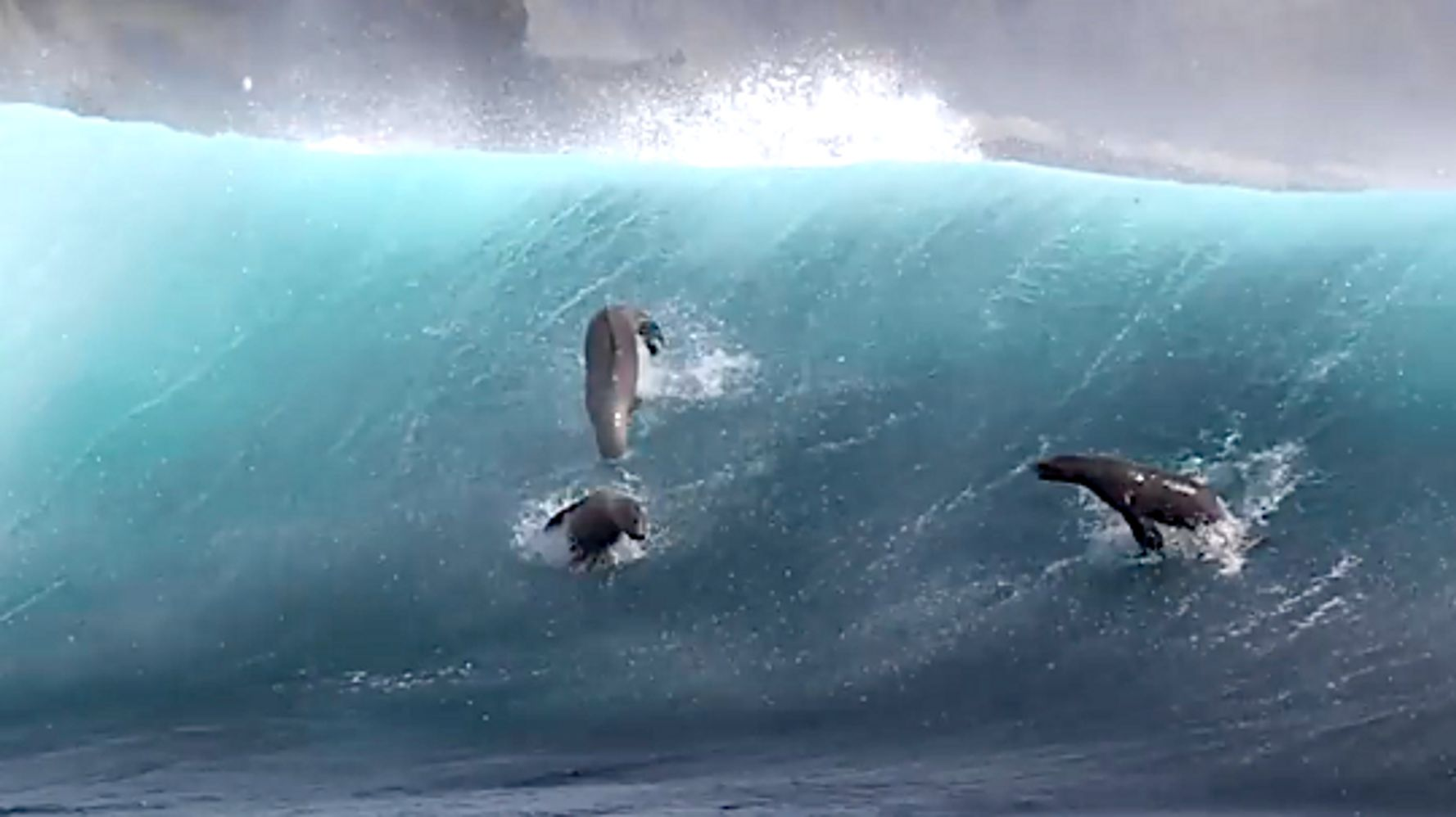 Watch Sea Lions 'Surfing' Off Santa Barbara Island For The Sheer Joy Of It