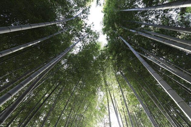 竹のトイレットペーパーでサスティナブル。41歳母の私が起業する訳