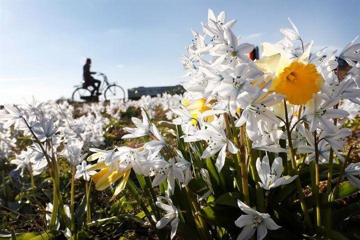 Flores en primavera.