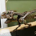 Αυτό το απολίθωμα αποκαλύπτει πώς οι δεινόσαυροι έκαναν