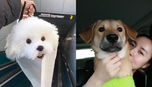 네티즌들 놀라게 한 간미연의 '강아지 인형'(왼쪽), 과거 강아지 임시보호 및 해외이동봉사를 했던 간미연