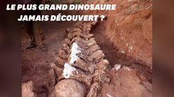 Le squelette du plus grand dinosaure pourrait avoir été trouvé en