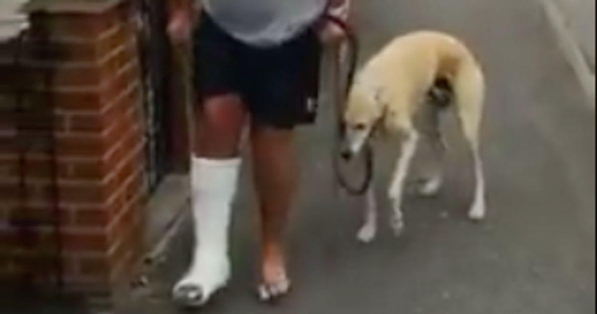 Il dépense 400 euros de vétérinaire et découvre que son chien boîte juste pour l'imiter
