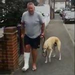 Il dépense 400 euros de vétérinaire et découvre que son chien boîte juste pour