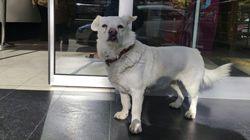 Devoted Dog Spent Days Outside Turkish Hospital Waiting For