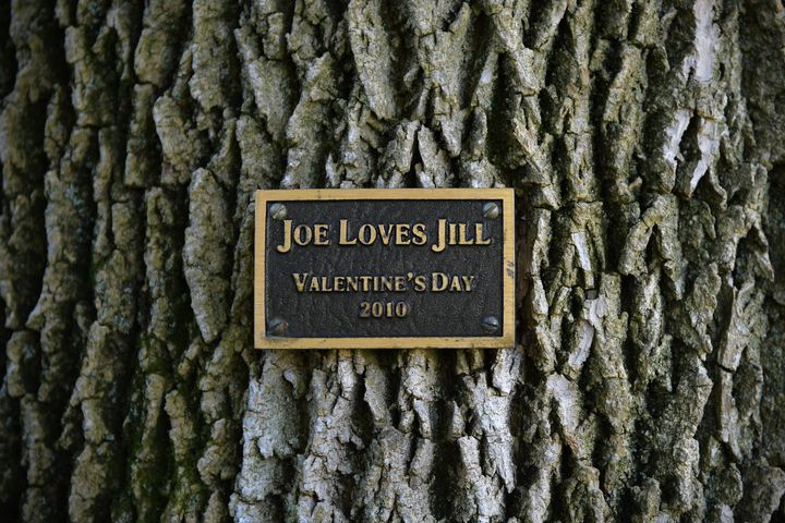 Vice President Joe Biden surprised his wife with a tree swing and a commemorative plaque on the grounds residence on Valentine's Day in 2010.