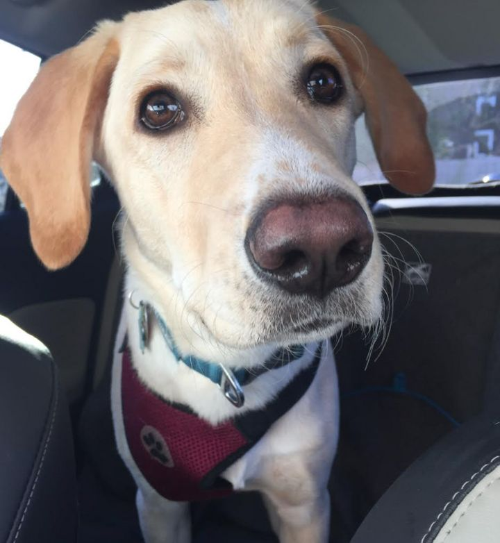 Beau (6 months) loves car rides.