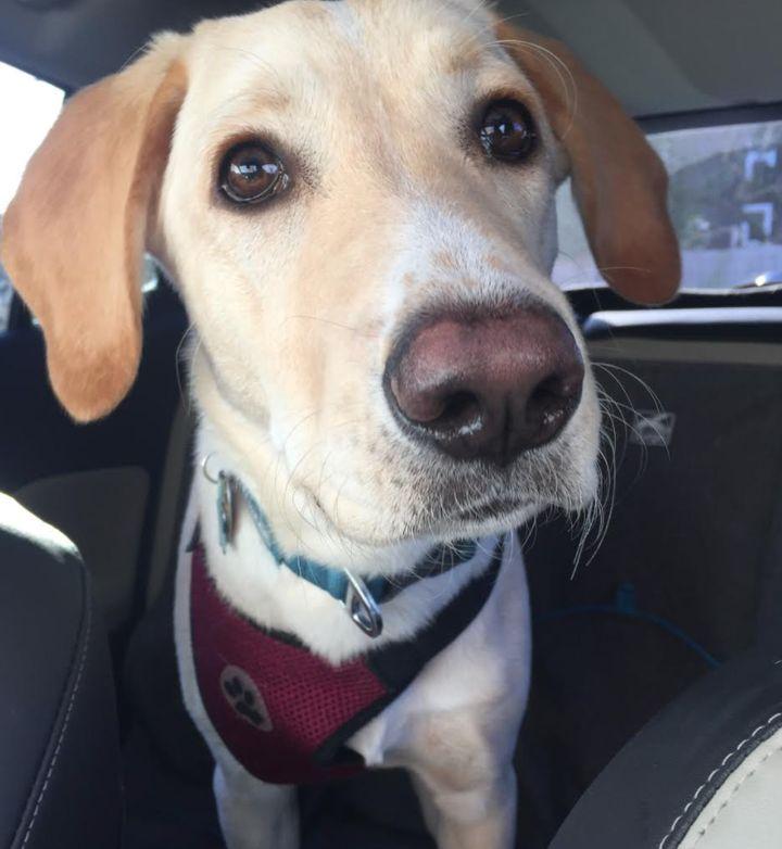 Beau (6 months) loves car rides.