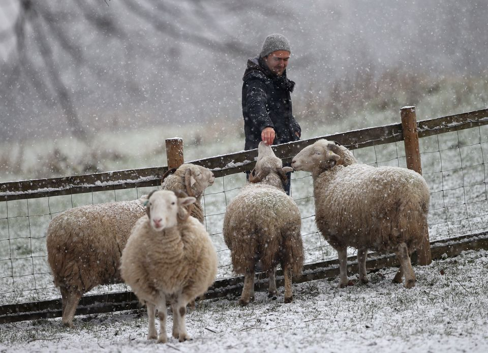 A man petting sheep during a snow shower in Mudchute Park and Farm,
