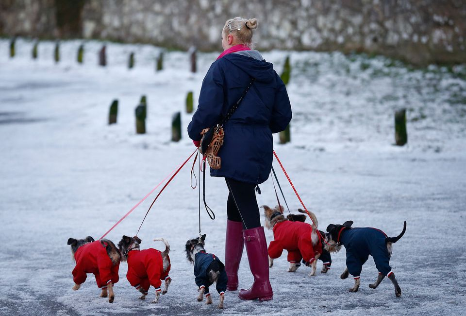 A woman walks dogs wearing jackets during icy conditions in Newtown