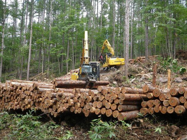 町有林の伐採作業風景。主に建築用材として利用されます