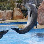 Les dauphins au Parc Astérix, c'est
