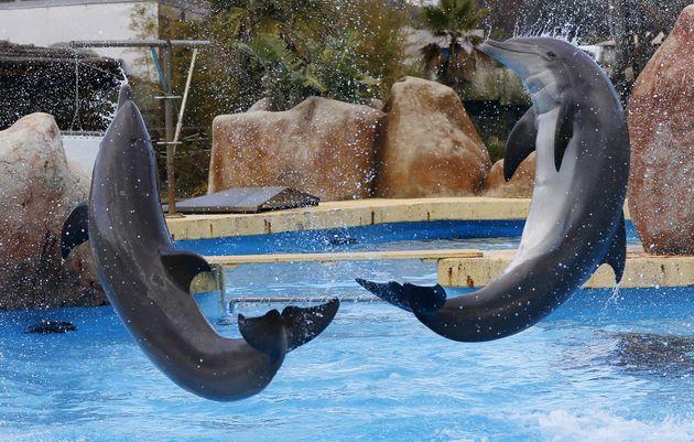 Le Parc Astérix va cesser de proposer des spectacles avec des dauphins, lors de sa réouverture...