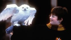 'Harry Potter' TV Series Reportedly In Development, And Fans Are Seriously