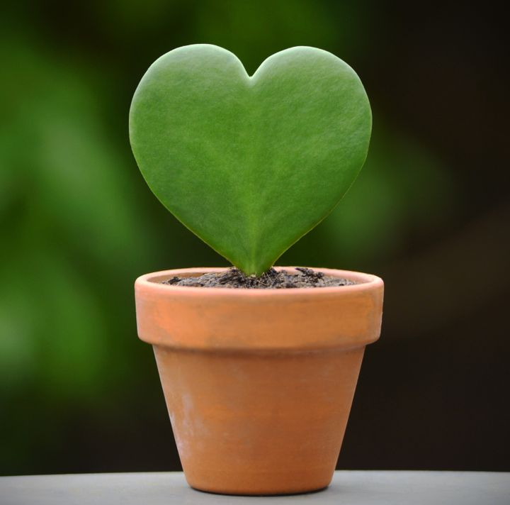 A living, growing symbol of your love ― here's hoping your Valentine can keep it alive.