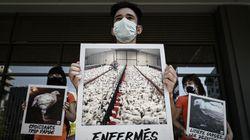 Pourquoi la proposition de loi contre la maltraitance animale écarte les sujets les plus