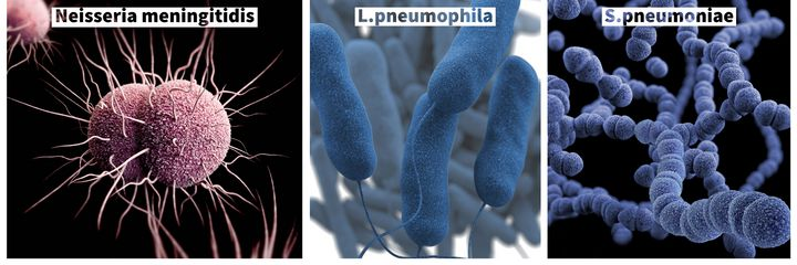 Bactéries pathogènes naturellement compétentes.