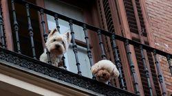 Dos ciudades españolas se cuelan entre las más 'pet-friendly' de