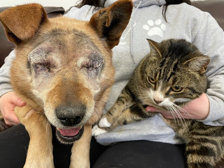 Spike and Max, a bonded cat and dog at a shelter in Alberta.