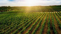 Αναγκαία και επείγουσα η στρατηγική «συναρμολόγηση» των αγροτικών