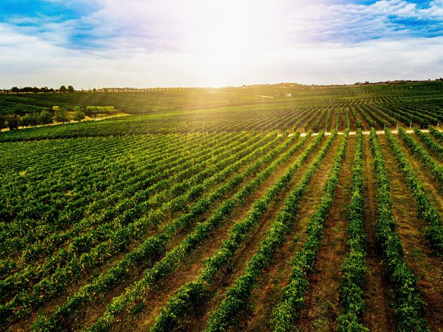 Aerial view of beautiful Vineyard landscape in Greece. Drone photography from