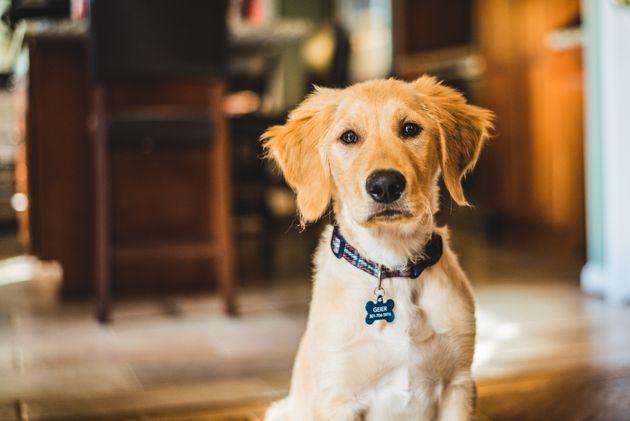 Un perro salva en Madrid a su dueño, enfermo de coronavirus, al alertar con ladridos de que estaba