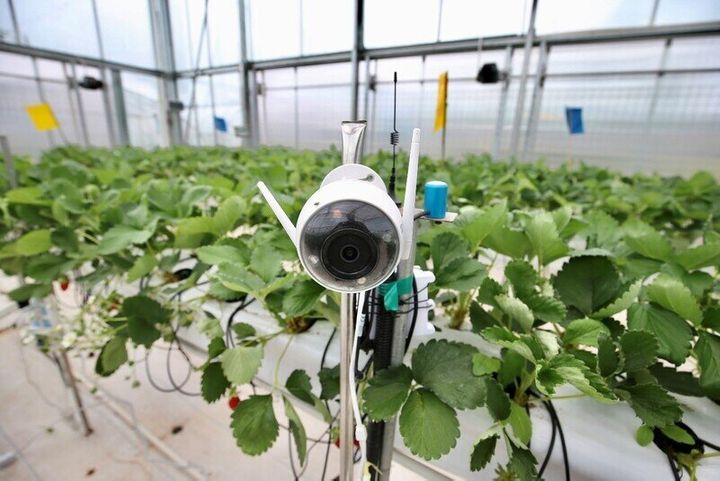 온실에 설치된 식물 성장 모니터링 센서.