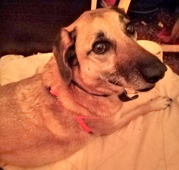 Κρήτη: Σκύλος έμεινε στο κατάρτι του ναυαγίου θρηνώντας τον κηδεμόνα