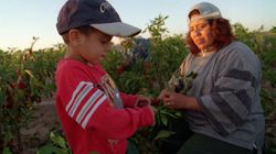 Canadians' Grocery Haul Increasingly Dependent On Child Labour: