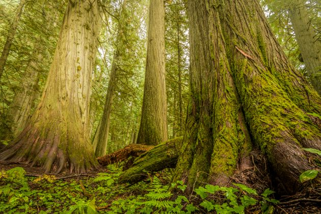 Trees accumulate carbon over decades of growth and releasethat stored carbon if they die or are
