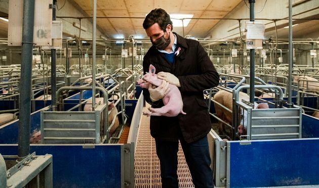 Pablo Casado, esta semana, en una Granja Porcina en Castellnou de Seana,