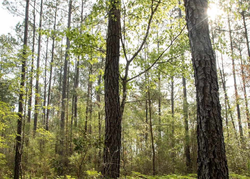 In January, Ingka Group bought 10,840 acres of forested land in southeast Georgia. It now owns 136,000...